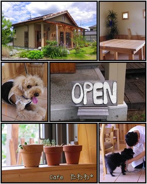 cats2_20110805152003.jpg