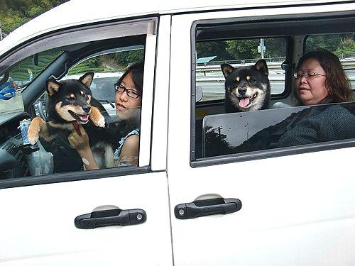 車に乗ったわんこたち