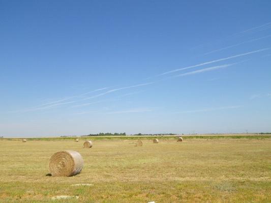 field4