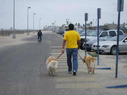 walking_dogs