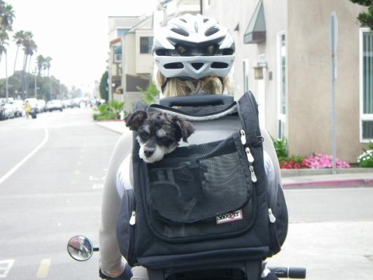 doggy_in_backpack
