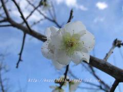 IMG_1526.jpg