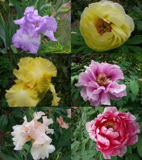 円照寺5月の花
