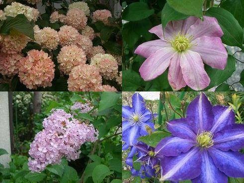 円照寺5月の花 2
