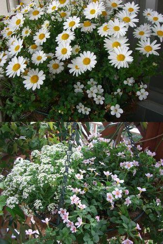 ハンギングの花
