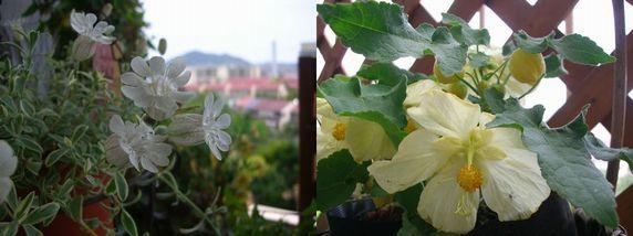 白と黄色の花