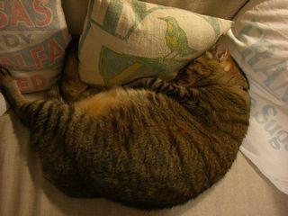 fat cat !