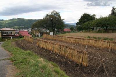 茅野のたんぼと里山風景
