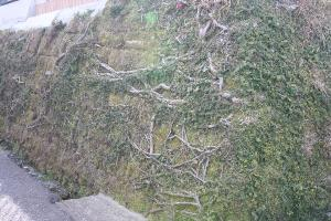 緑化した石垣