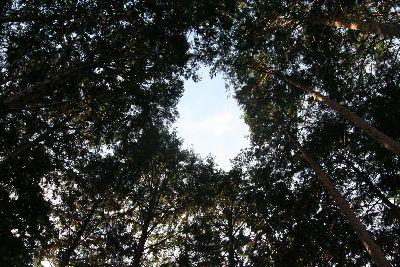 杉林の空穴