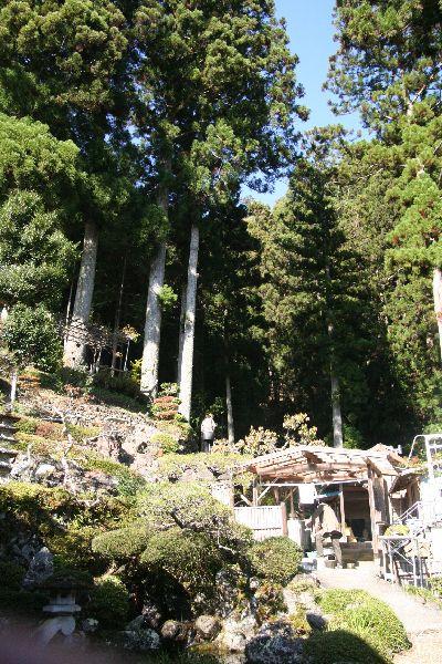 天竜杉裏山