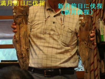 新月伐採と満月伐採の木材の比較