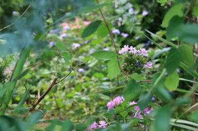 2009-08-24_27.jpg