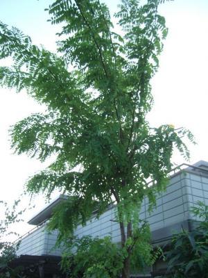 2009-08-31_58.jpg