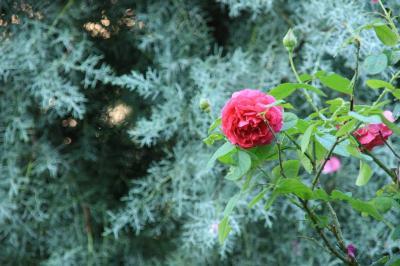 2009-09-06_21.jpg