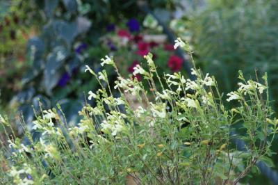 2009-09-07_10.jpg