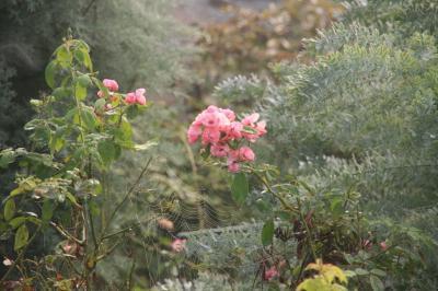 2009-09-16_01.jpg