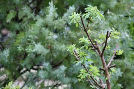 2011-05-10_01.jpg