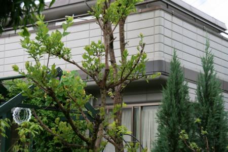 2011-05-10_20.jpg