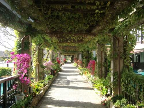 花のトンネル