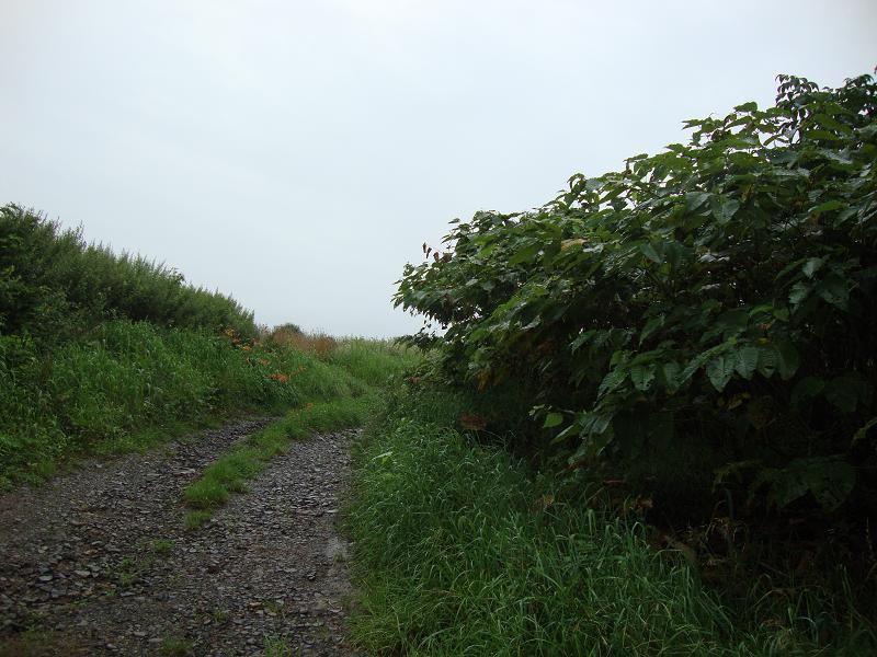 刈分地区に残る「刈分道路」の一部