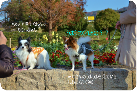 DSC_3846.png