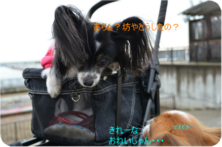 DSC_6249.jpg