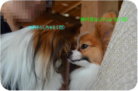DSC_6845.png