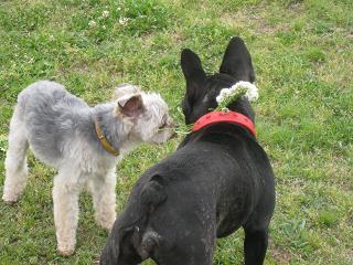 犬6と花輪