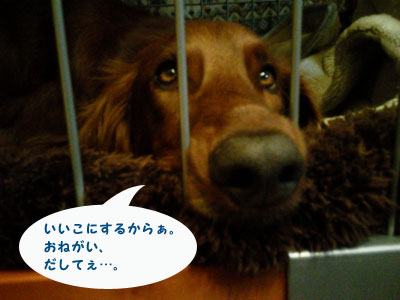 NEC_0395.jpg