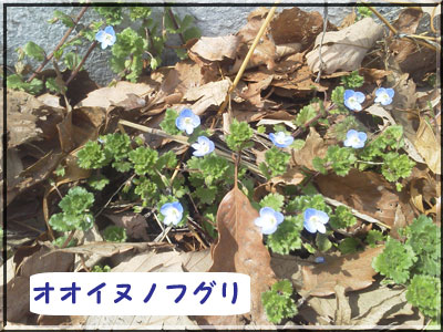 NEC_0449_20120329153952.jpg