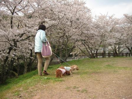 ⑦花と犬とおばさん