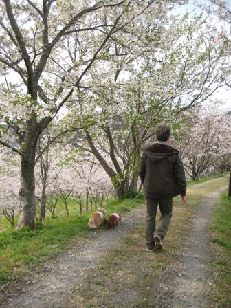 ③花と犬とおじさん