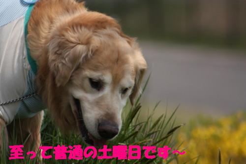 bu-72370001.jpg