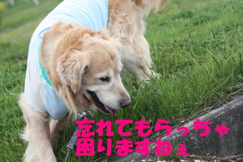 bu-7245a0001.jpg