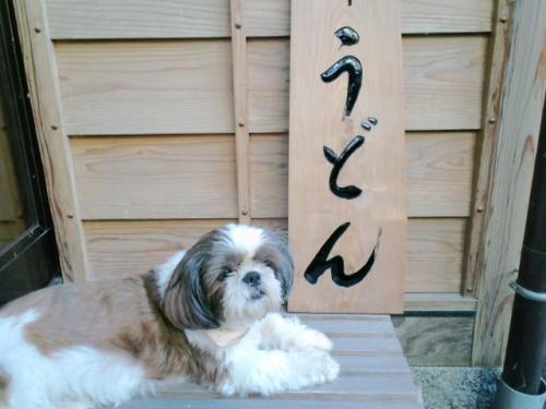 うどん犬3