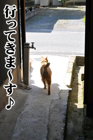 お出かけ虎次郎4.8