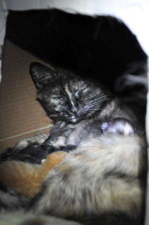 母猫と仔猫2012.4.14