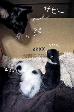 仔猫とサビー