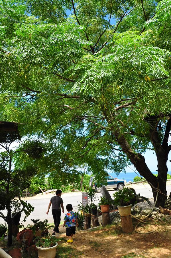 島の茶屋03