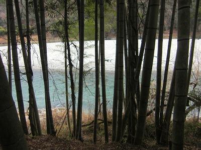 竹やぶから天竜川