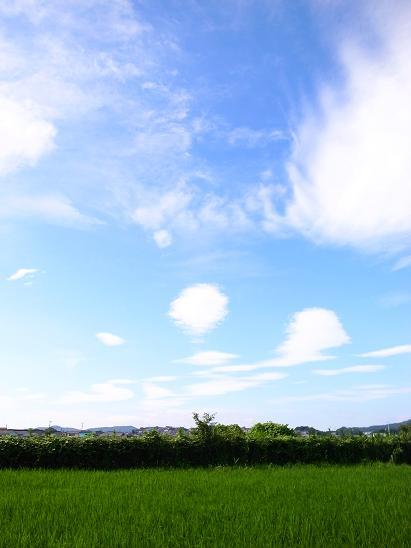 sky & rice field