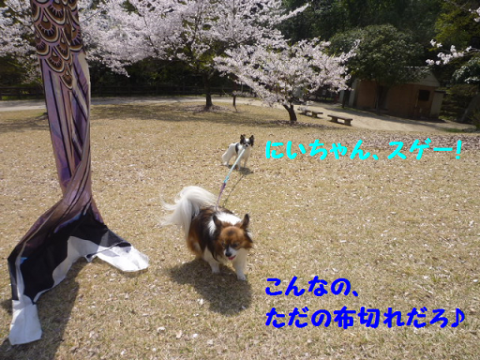2012419-5.png