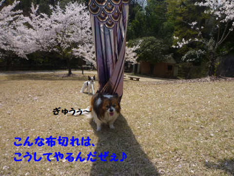 2012419-6.png