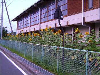 醸芳小学校090819-3