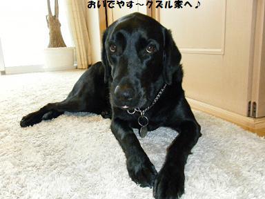おいでやす~って関西弁ちゃうやんかっ!