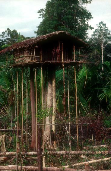 コロアイ族