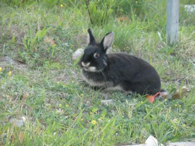 2012.04.01 Impuruneta ウサギ