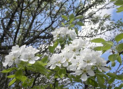 2012.04.11 桜