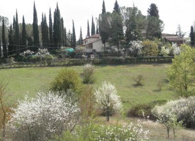 2012.04.11 トスカーナの桜